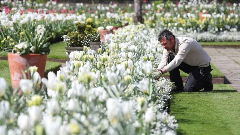 An Historic Royal Palaces gardener undertakes some weeding in the White Garden at Kensington Palace, London