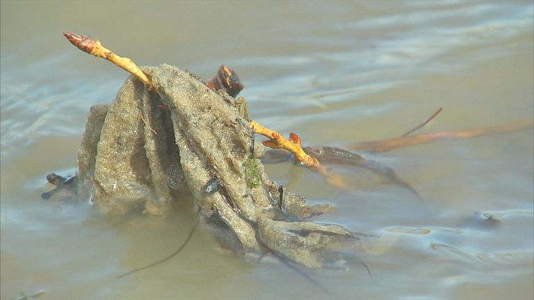Wet wipes have been found alongside the River Thames
