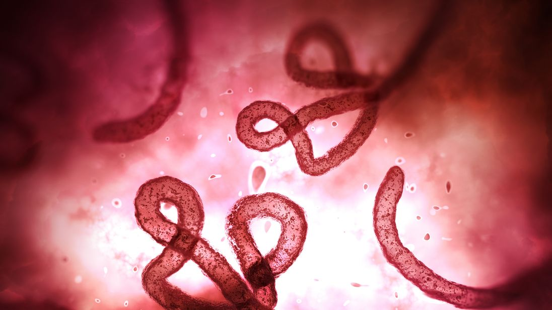 The Ebola virus as seen through a microscope. File pic