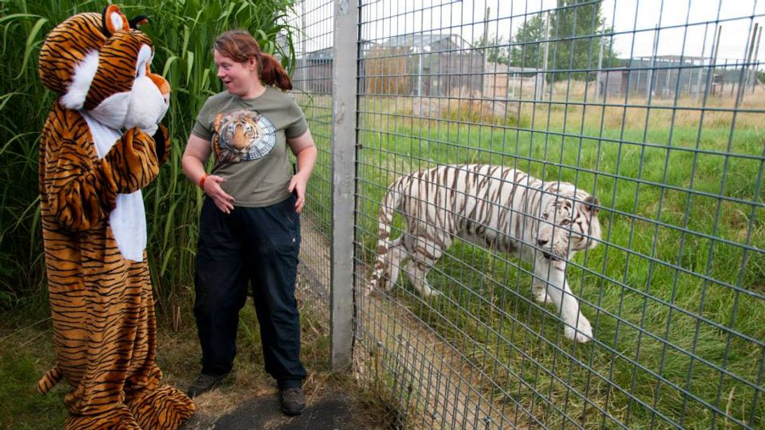 Rosa King with a colleague in costume and one of the zoo's tigers