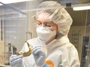 Scientist Verena Schuenemann examines the lower jaw bone of an ancient Egyptian mummy