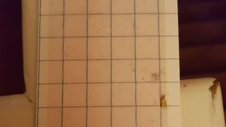 Clothes moths caught in a moth pheromone trap
