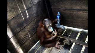 Little Kotap was kept in the box for two years. Pic. International Animal Rescue