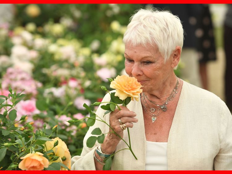 Dame Judi Dench at Chelsea Flower Show 2017