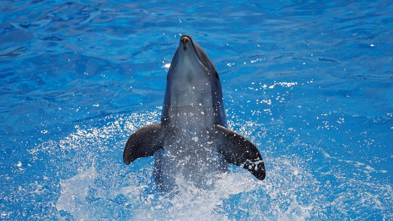 A dolphin performs at Marineland in Antibes, France