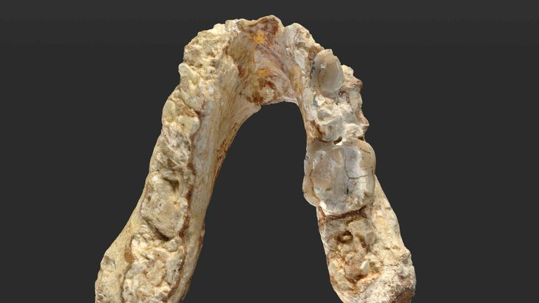 A 7.24 million-year-old upper premolar tooth from the ape-like creature Graecopithecus