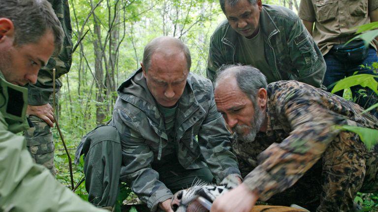 Vladimir Putin holds a tiger's head