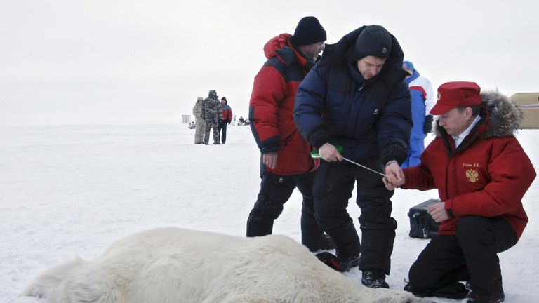 Vladimir Putin and scientists examining a polar bear on the island Alexandra Land in the Arctic Ocean, April 2010