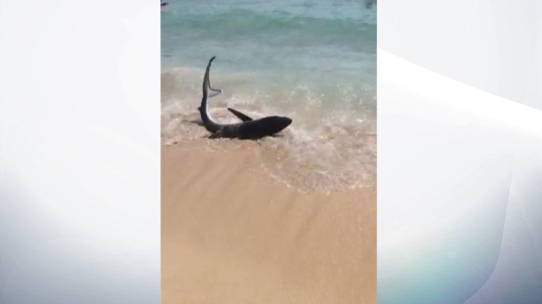A shark washes up on a beach near Magaluf, Majorca