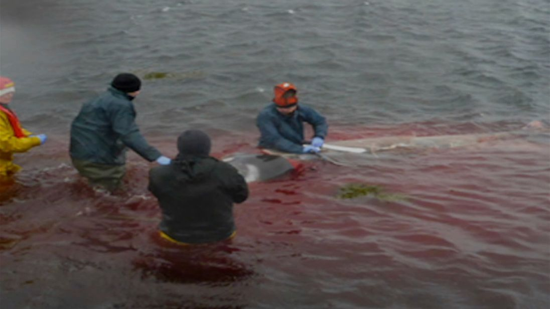 A whale had to be euthanised near the Isle of Skye after it had eaten four kilos of plastic.