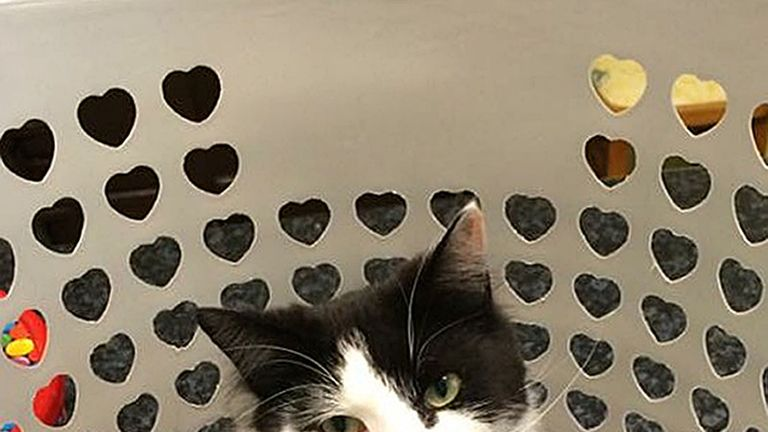 Mr Mistoffelees is the latest cat thought to have been poisoned in Cilgerran
