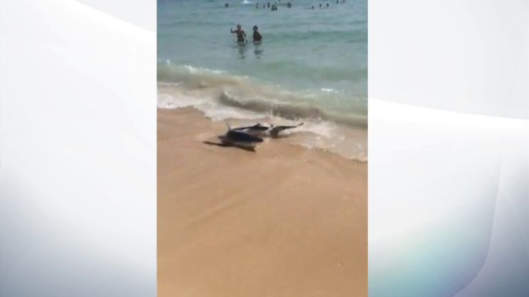 The beach in Illetas, near Magaluf, was closed after the shark washed ashore