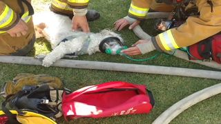 The dog was revived with a specialised animal oxygen mask