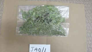 Cannabis recovered by police from Maxwell's locker at Norton Manor Camp in Somerset