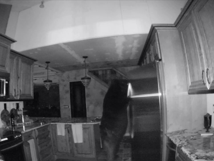 The bear easily opened the refrigerator door and helped himself to food inside