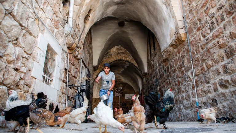 A Palestinian feeds hens in an alley of an old market