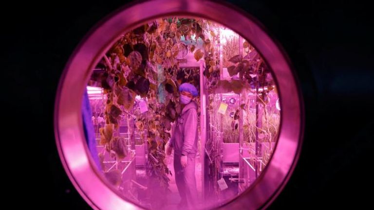 A volunteer checks on plants inside a simulated space cabin. Pic: REUTERS/Damir Sagolj