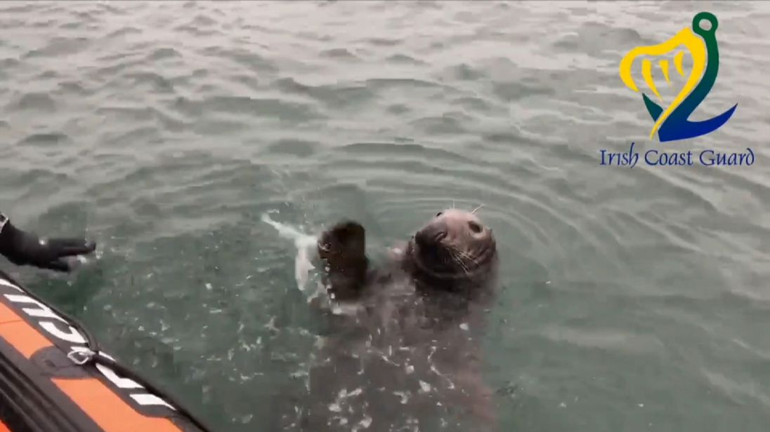 The Irish Coast Guard encounter a seal who wants to wave at them