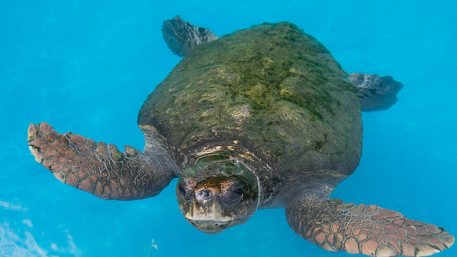 351 sea turtles found dead on same coastline as mass sea lion beaching