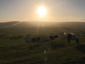 Shetland is famous for its ponies