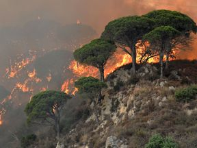 Firefighters across Italy have been dealing with thousands of fires this year