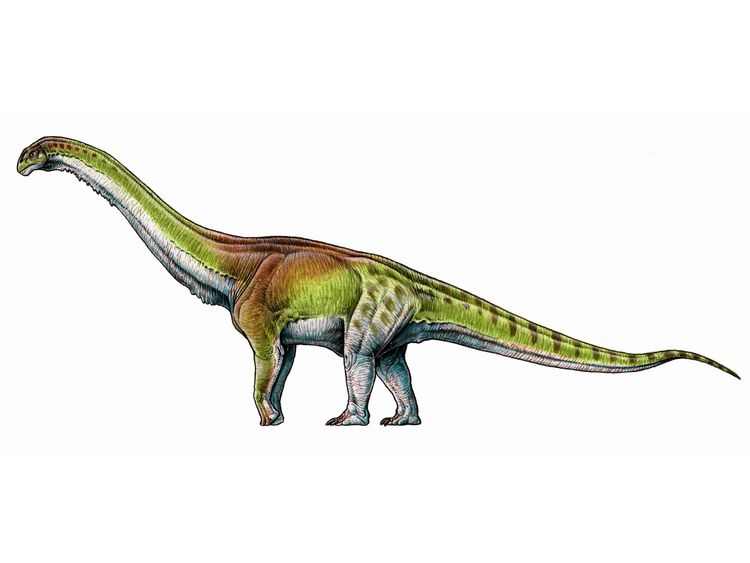 An artist's impression of the Patagotitan mayorum