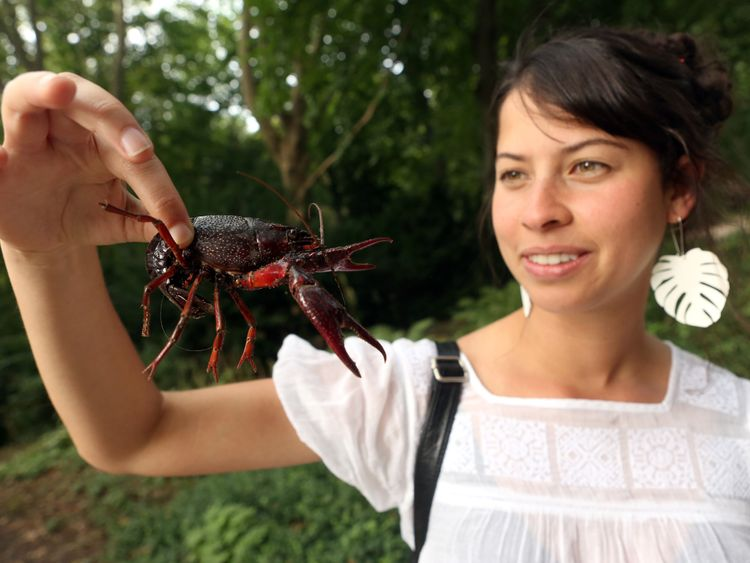 A tourist holds a Louisiana crawfish, or Procambarus clarkii, in Berlin's Tiergarten park