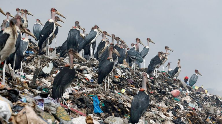 Marabou storks stand on a pile of recyclable plastic materials at the Dandora dumping site on the outskirts of Nairobi, Kenya August 25, 2017. Picture taken August 25, 2017. REUTERS/Thomas Mukoya