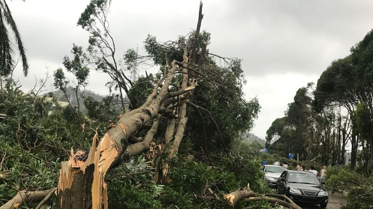 Trees are uprooted by Hato in Macau