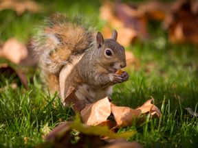 The man is accused of using a dead squirrel to drum up business with false claims of infestation