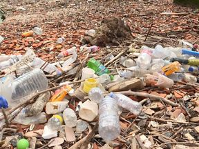 Public volunteers to count plastic bottles washed along shore of Thames