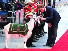 Lance Corporal Shenkin III receives some attention from Prince Harry