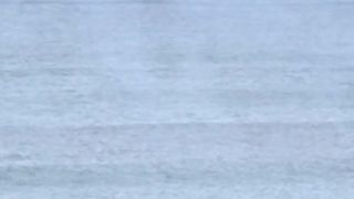Killer whales shock surfers in Norway