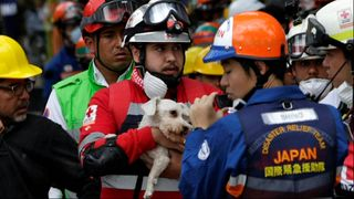 A dog is rescued from rubble after an earthquake in Mexico