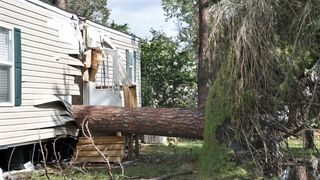An uprooted tree that slashed a trailer in half in Kissimmee, Florida