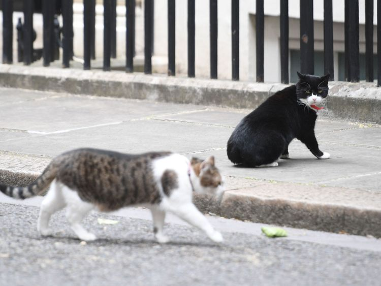 Palmerston (R) watching Larry the Downing Street cat walk by in Downing Street