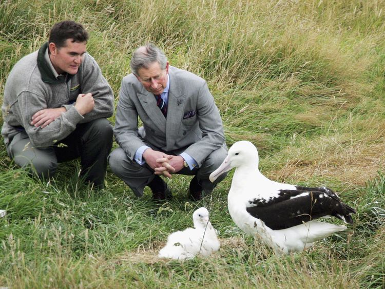Prince Charles and Head Ranger Lyndon Perriman inspect the nest of a Northern Royal Albatross and it's six week old chick during a visit to Taiaroa Heads Albatross Colony outside Dunedin March 6, 2005
