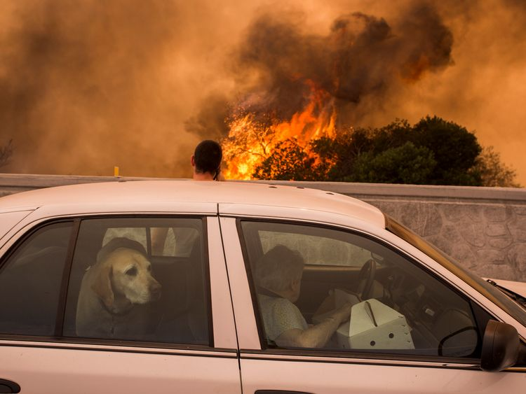 Residents on the 210 freeway try to see if their house and two of their cats on the other side of thick smoke and flames might burn near the community of Tujunga