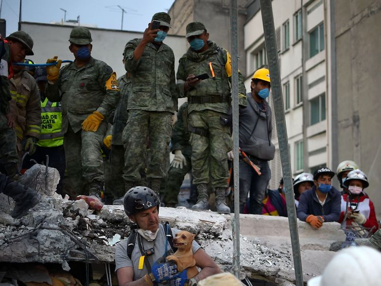 A dog is pulled out of the rubble alive in  Mexico City
