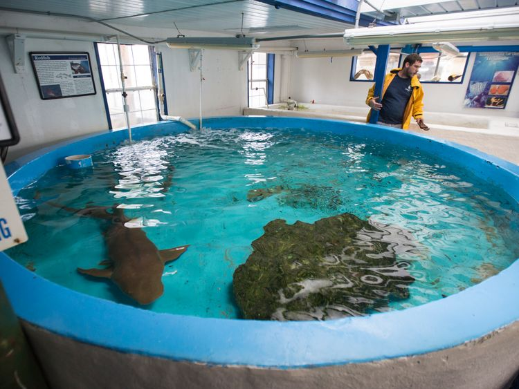 Sharks as other animals had to be evacuated to safety