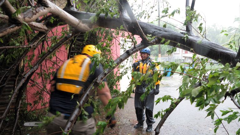 Search and rescue crew members clears a fallen tree during a search mission in Fajardo, Puerto Rico