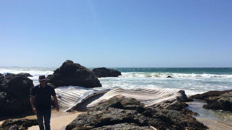 Nobbys Beach, Port Macquarie. Pic: Port Macquarie-Hastings Council