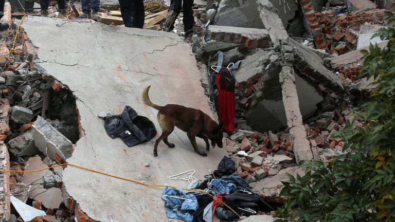A rescue dog searches for people among the rubble of a collapsed building