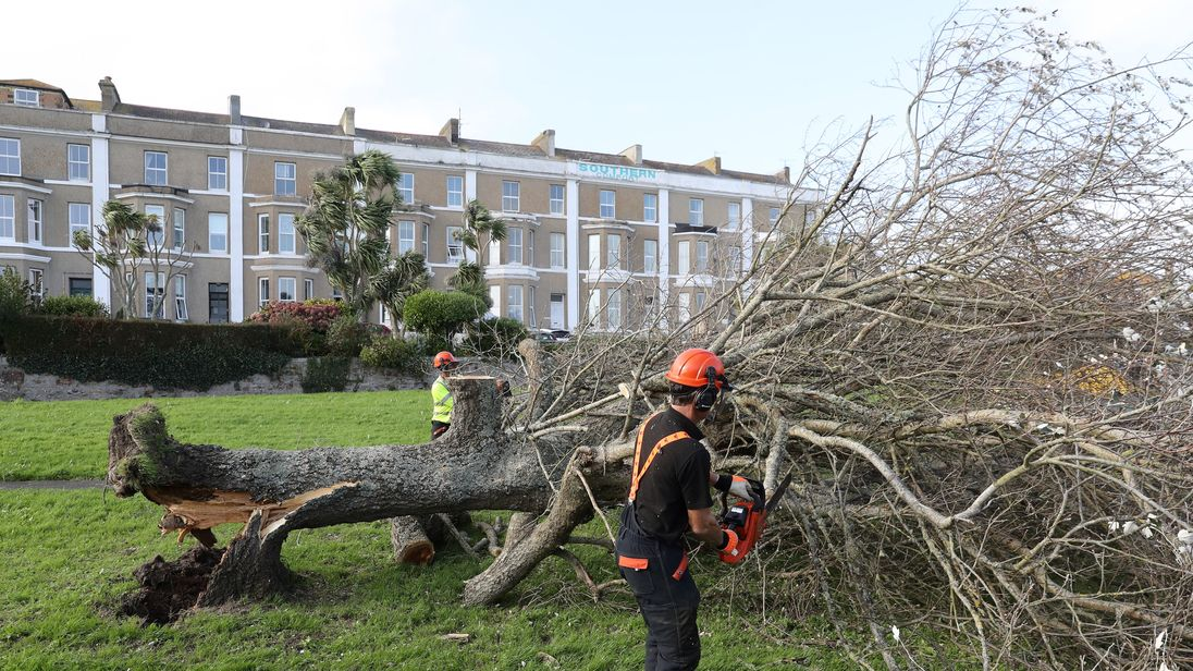 A tree surgeon cuts up a fallen tree in Penzance