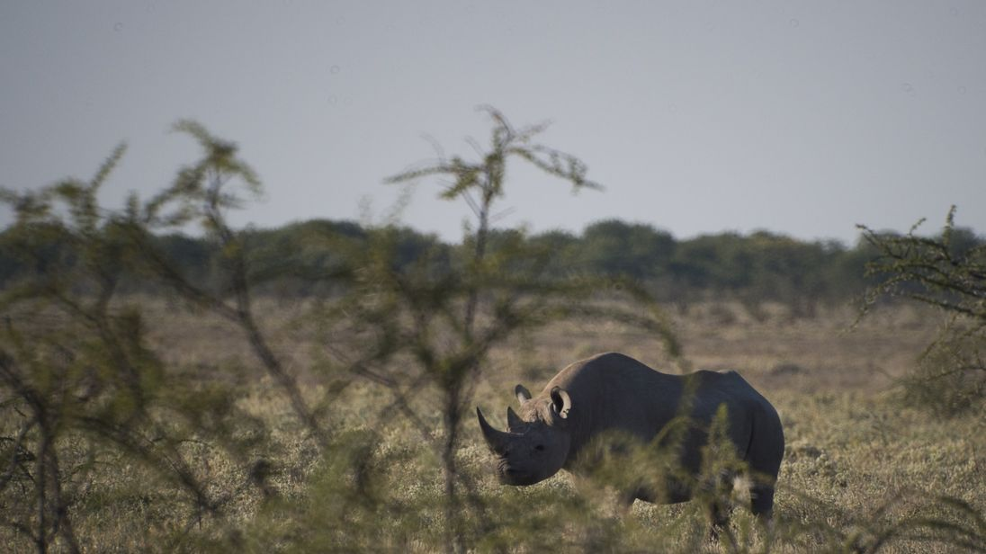The suspected poachers allegedly entered northern Namibia's Etosha National Park