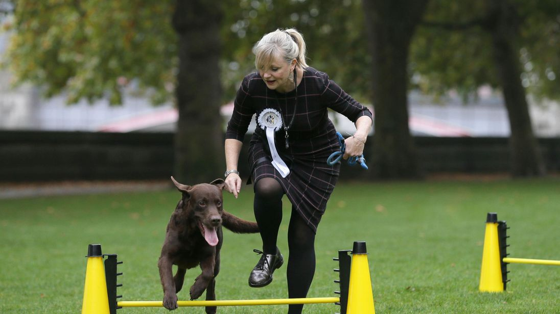 racy Brabin, MP for Batley and Spen with Labrador Rocky tackling the agility course before being announced as winner of the 25th Westminster Dog of the Year competition organised jointly by Dogs Trust and The Kennel Club, London.