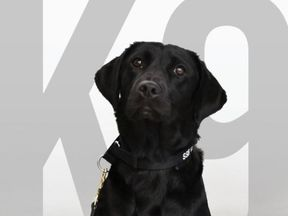 Lulu the sniffer dog who got dropped from the programme for not sniffing bombs - pic: CIA Twitter