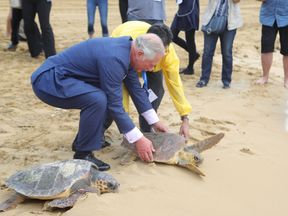 Prince Charles releases a rehabilitated turtle on Golden Bay beach in Malta