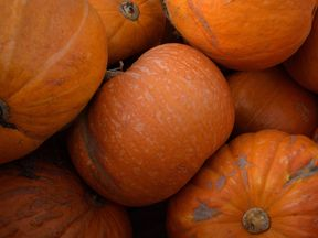 Pumpkins - not a flavour of air freshener to everyone's taste, clearly.