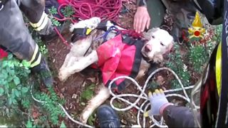 It took firefighters two hours to remove Tobby from the forest pit
